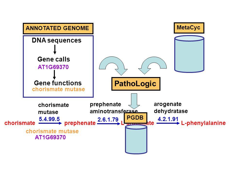 PathoLogic ANNOTATED GENOME AT1G69370 chorismate mutase prephenate aminotransferase arogenate dehydratase chorismateprephenateL-arogenateL-phenylalanine 5.4.99.5 2.6.1.79 4.2.1.91 Gene calls Gene functions DNA sequences AT1G69370 chorismate mutase MetaCyc PGDB