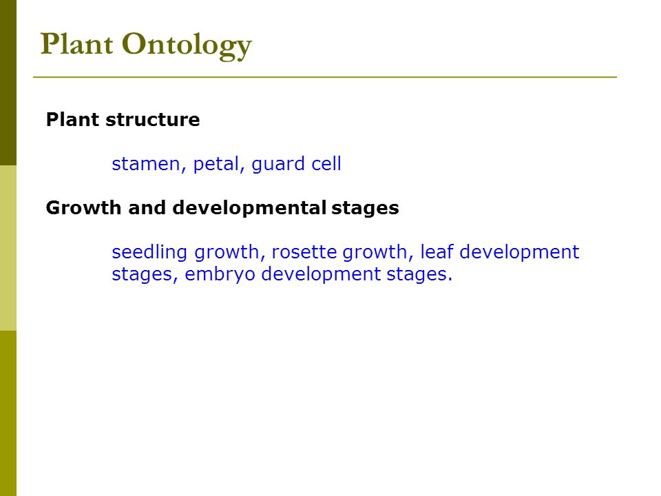 Plant Ontology Plant structure stamen, petal, guard cell Growth and developmental stages seedling growth, rosette growth, leaf development stages, embryo development stages.