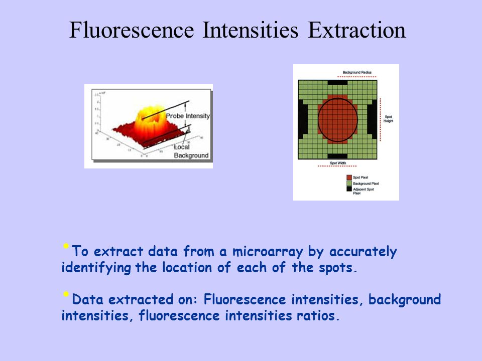 Fluorescence Intensities Extraction To extract data from a microarray by accurately identifying the location of each of the spots. Data extracted on: