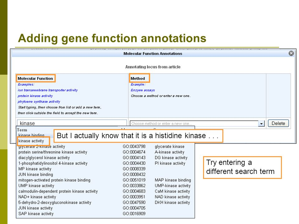 Adding gene function annotations kinase But I actually know that it is a histidine kinase...