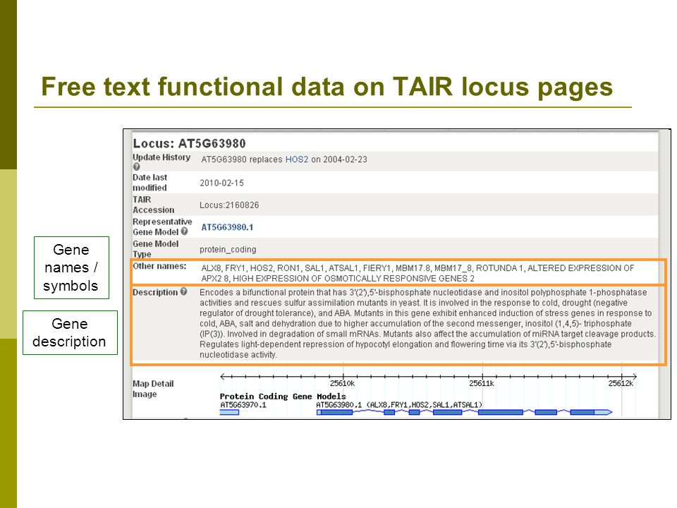 Free text functional data on TAIR locus pages Gene description Gene names / symbols