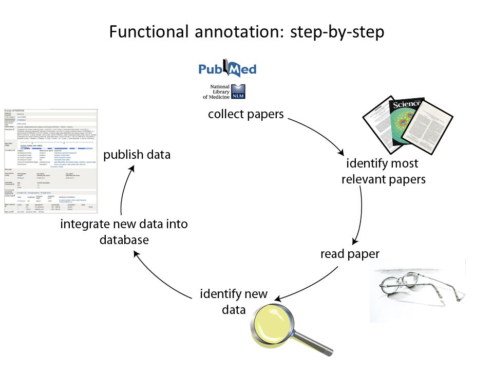 Functional annotation: step-by-step