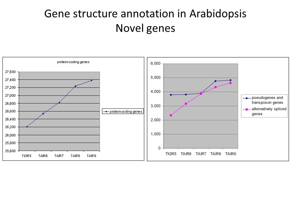 Gene structure annotation in Arabidopsis Novel genes