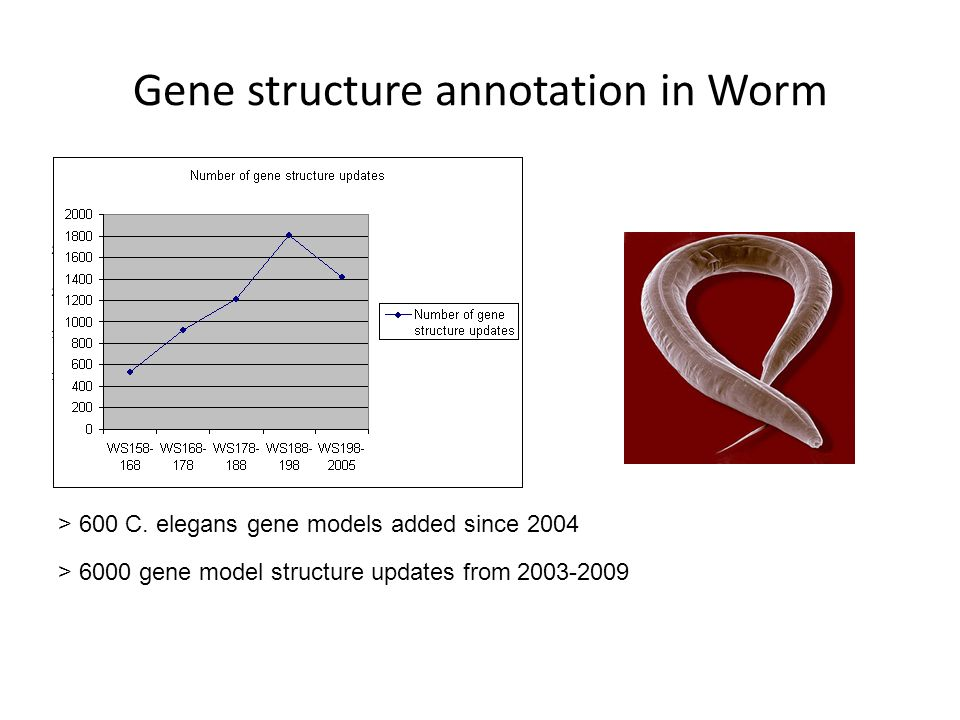 Gene structure annotation in Worm > 600 C. elegans gene models added since 2004 > 6000 gene model structure updates from 2003-2009