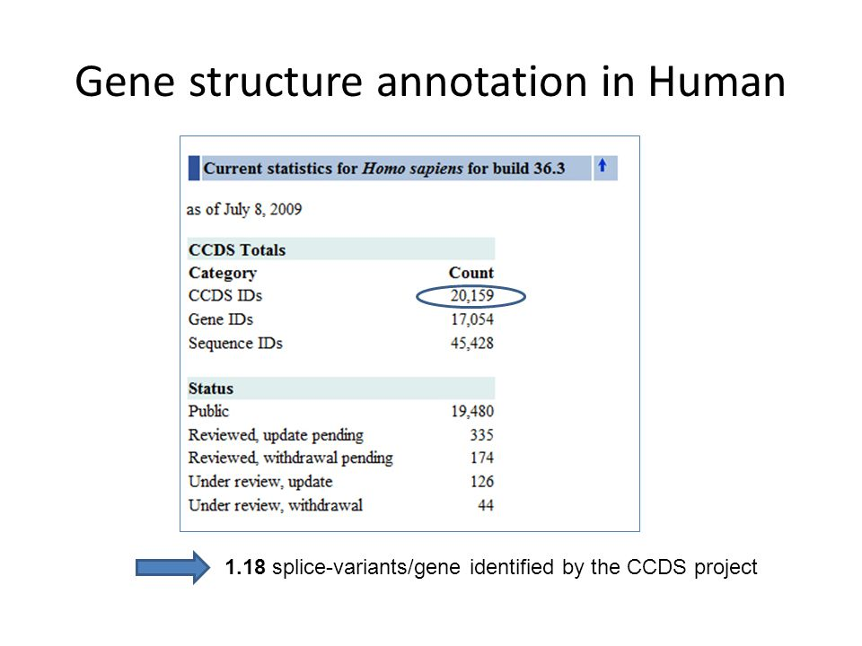 Gene structure annotation in Human 1.18 splice-variants/gene identified by the CCDS project