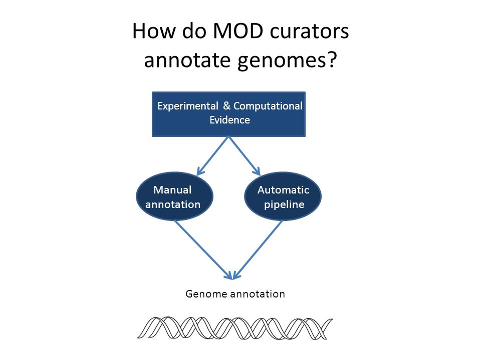 How do MOD curators annotate genomes? Experimental & Computational Evidence Automatic pipeline Manual annotation Genome annotation