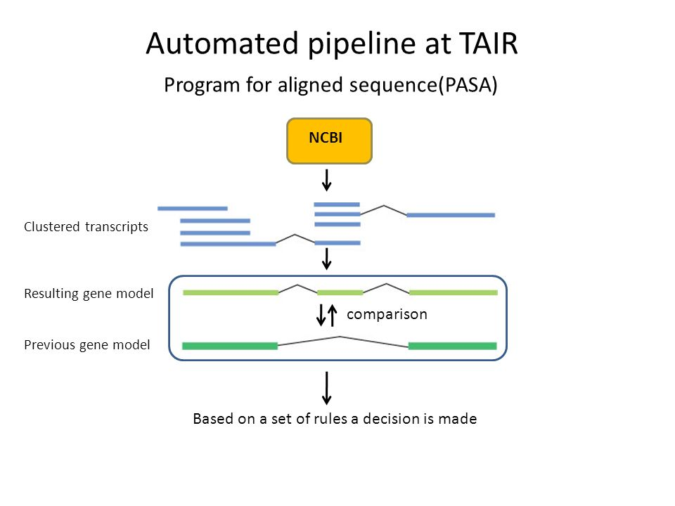 Automated pipeline at TAIR Program for aligned sequence(PASA) Clustered transcripts Resulting gene model Previous gene model Based on a set of rules a