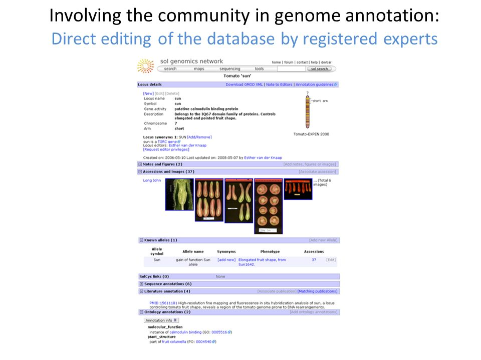 Involving the community in genome annotation: Direct editing of the database by registered experts