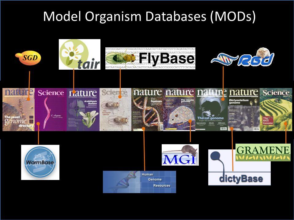 Model Organism Databases (MODs)