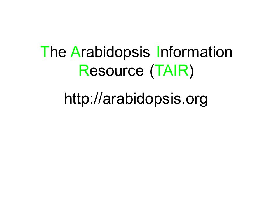 The Arabidopsis Information Resource (TAIR)