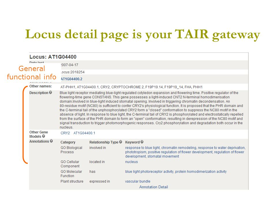 Locus detail page is your TAIR gateway General functional info