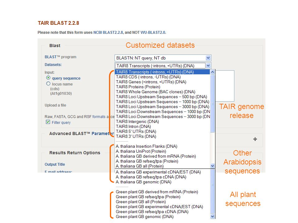 Customized datasets TAIR genome release Other Arabidopsis sequences All plant sequences