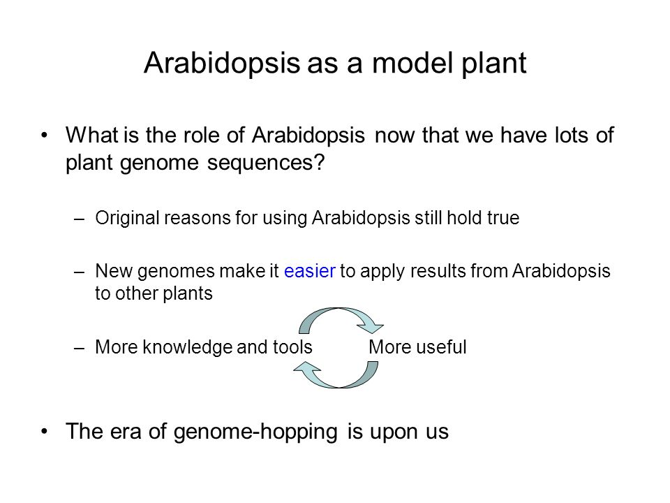 Arabidopsis as a model plant What is the role of Arabidopsis now that we have lots of plant genome sequences.