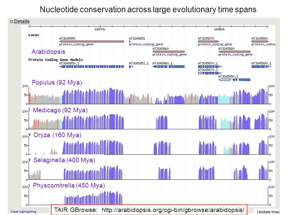 Arabidopsis Populus (92 Mya) Medicago (92 Mya) Oryza (160 Mya) Selaginella (400 Mya) Physcomitrella (450 Mya) TAIR GBrowse: http://arabidopsis.org/cgi-bin/gbrowse/arabidopsis/ Nucleotide conservation across large evolutionary time spans