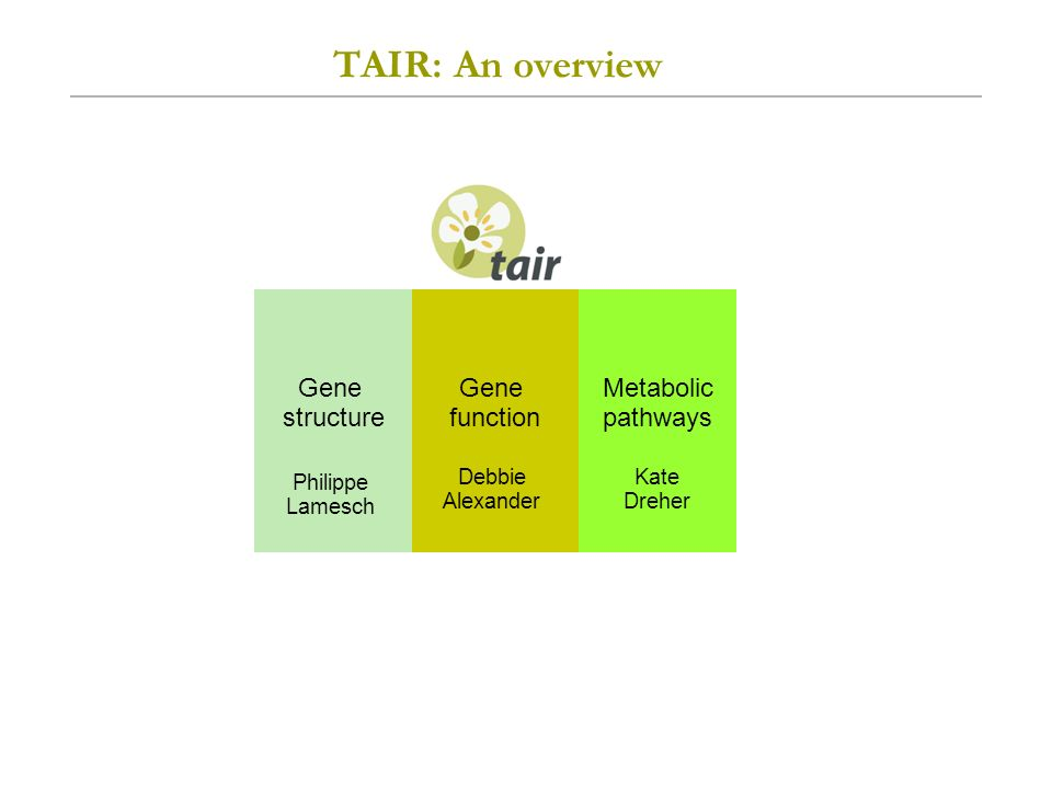 TAIR: An overview Gene function Gene structure Metabolic pathways Debbie Alexander Philippe Lamesch Kate Dreher