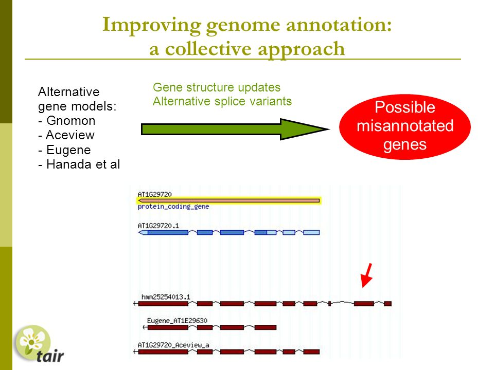 Improving genome annotation: a collective approach Alternative gene models: - Gnomon - Aceview - Eugene - Hanada et al Gene structure updates Alternative splice variants Possible misannotated genes