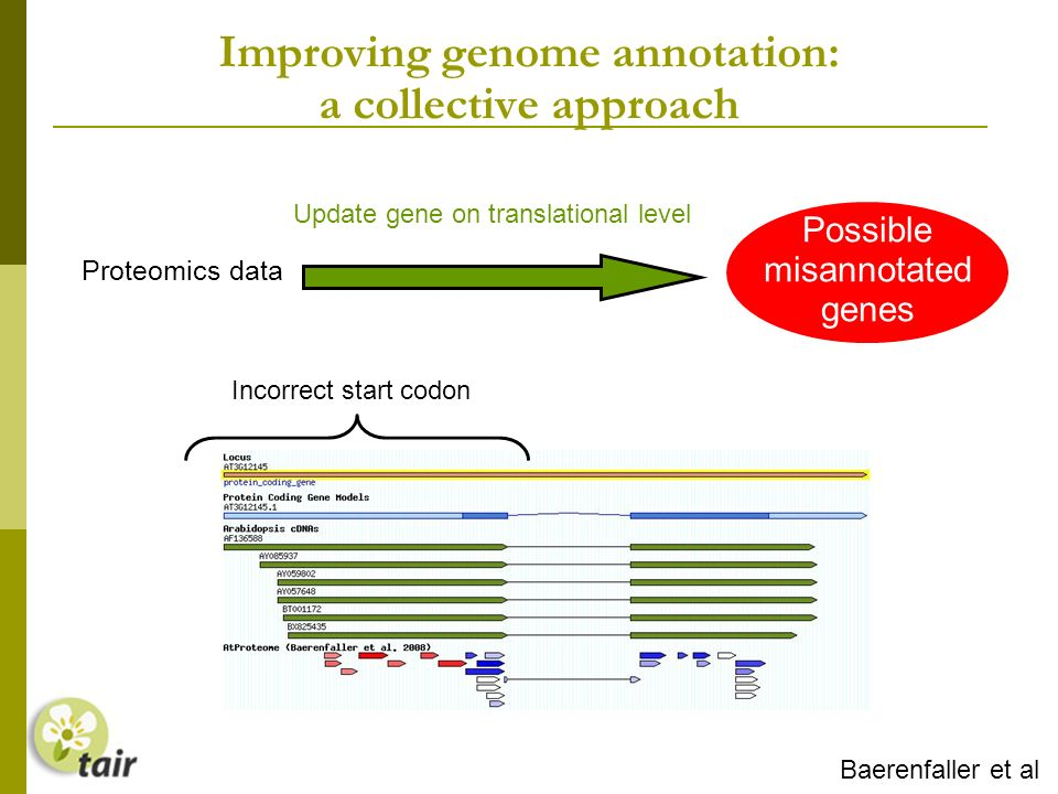 Improving genome annotation: a collective approach Update gene on translational level Possible misannotated genes Proteomics data Incorrect start codon Baerenfaller et al