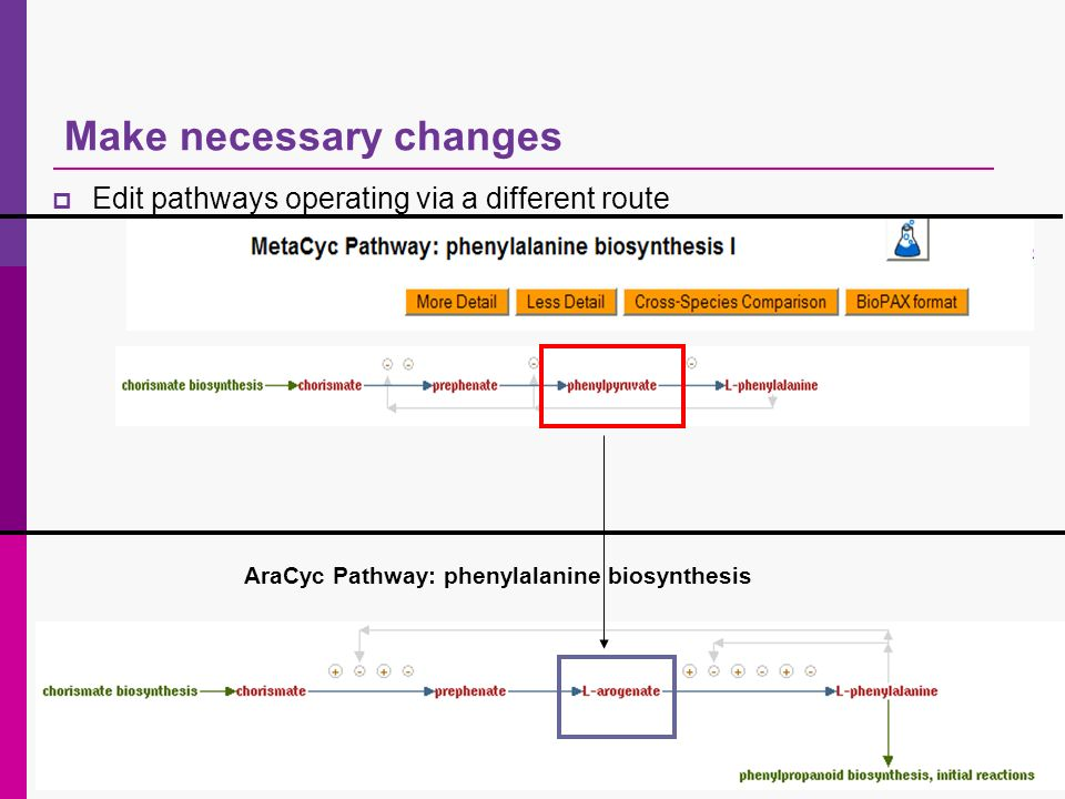 Make necessary changes AraCyc Pathway: phenylalanine biosynthesis Edit pathways operating via a different route