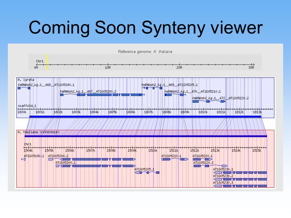 Coming Soon Synteny viewer