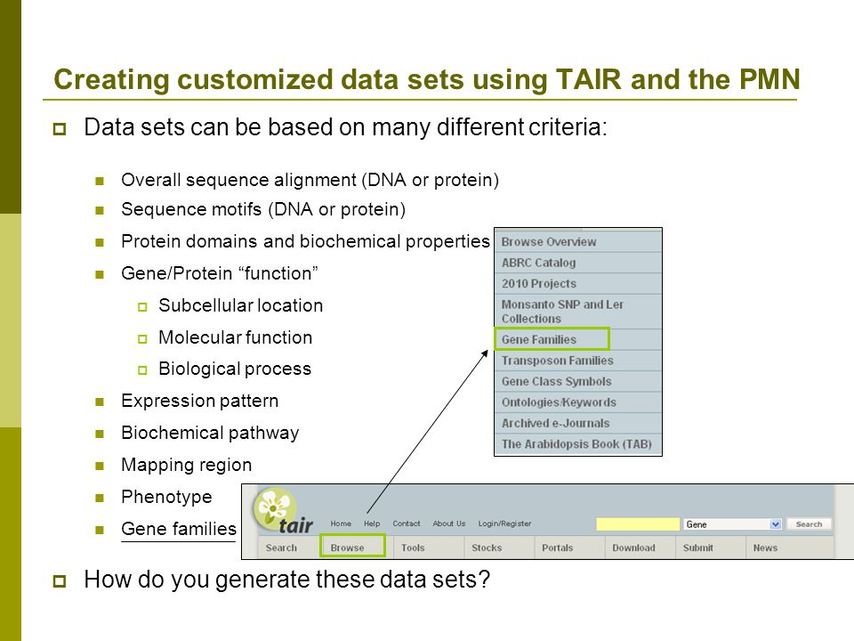 Data sets can be based on many different criteria: Overall sequence alignment (DNA or protein) Sequence motifs (DNA or protein) Protein domains and biochemical properties Gene/Protein function Subcellular location Molecular function Biological process Expression pattern Biochemical pathway Mapping region Phenotype Gene families Creating customized data sets using TAIR and the PMN How do you generate these data sets