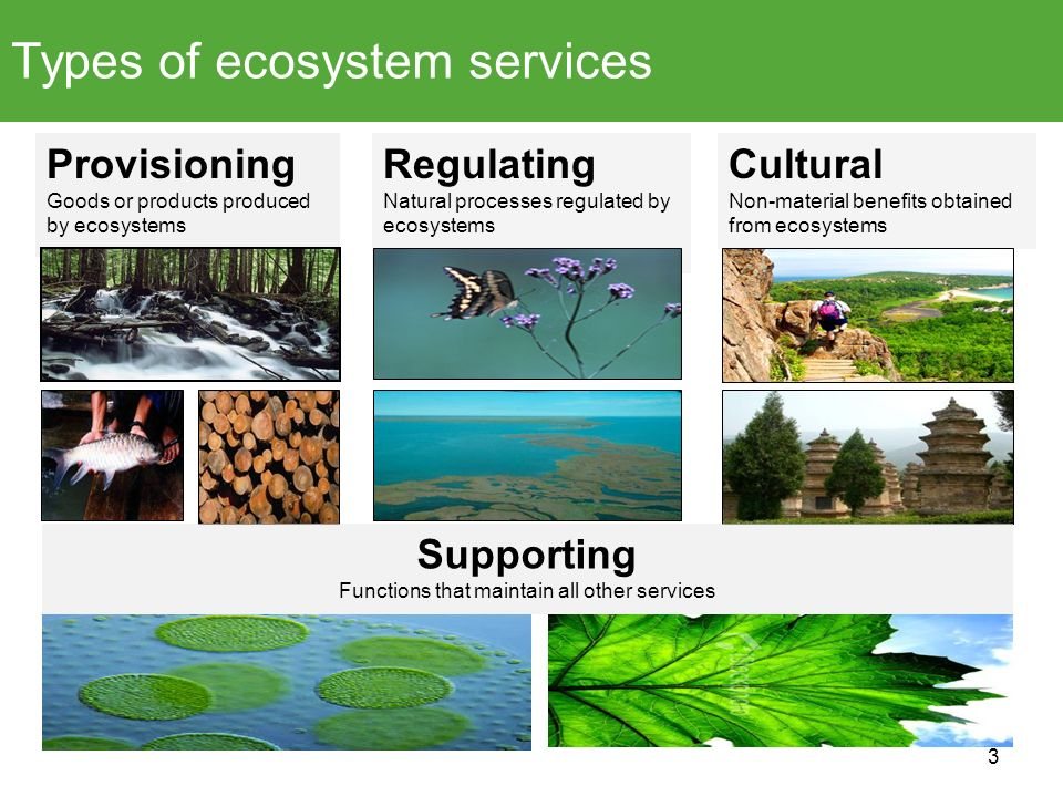 Provisioning Goods or products produced by ecosystems Regulating Natural processes regulated by ecosystems Cultural Non-material benefits obtained fro
