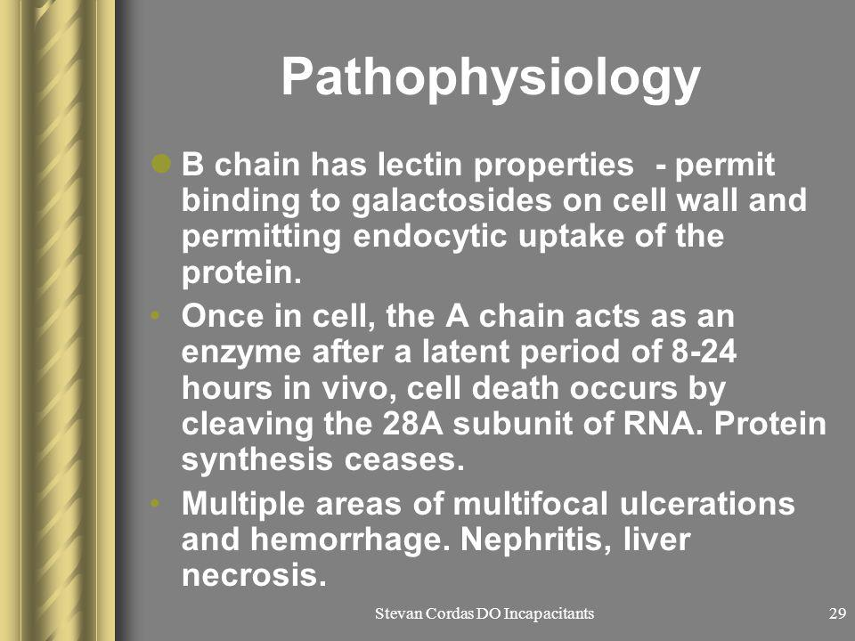 Stevan Cordas DO Incapacitants29 Pathophysiology B chain has lectin properties - permit binding to galactosides on cell wall and permitting endocytic