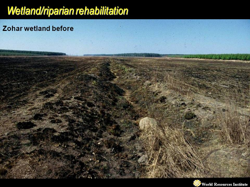 World Resources Institute Wetland/riparian rehabilitation Zohar wetland before