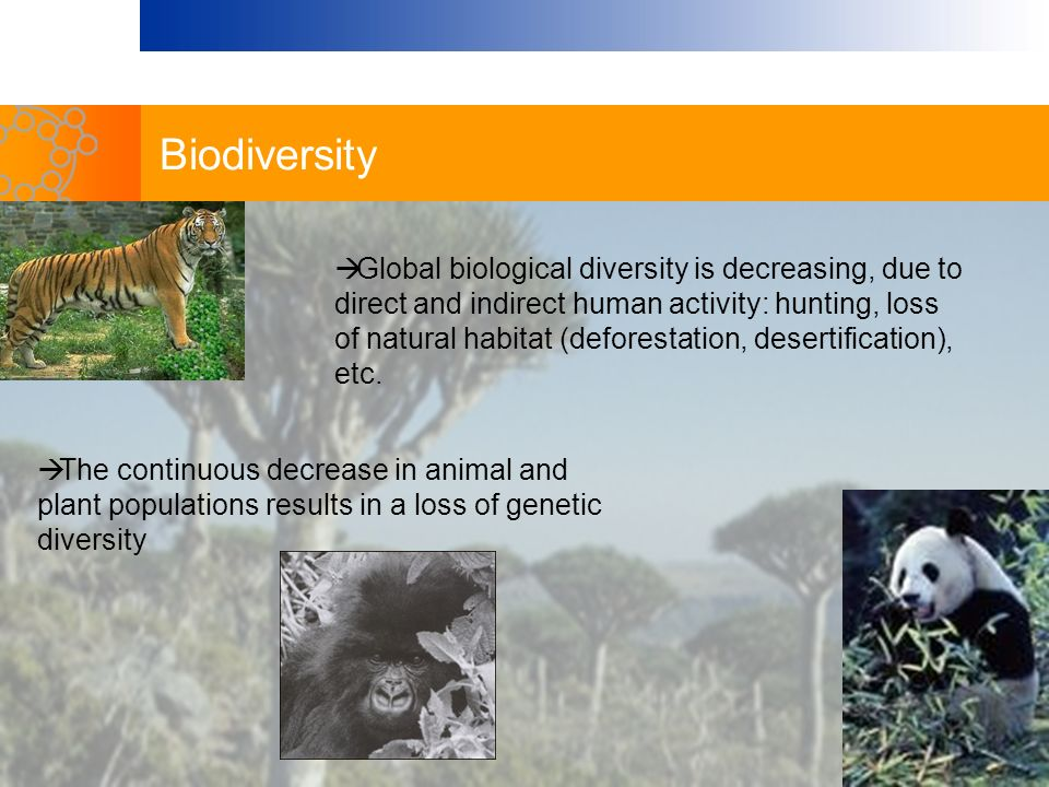 The continuous decrease in animal and plant populations results in a loss of genetic diversity Global biological diversity is decreasing, due to direc