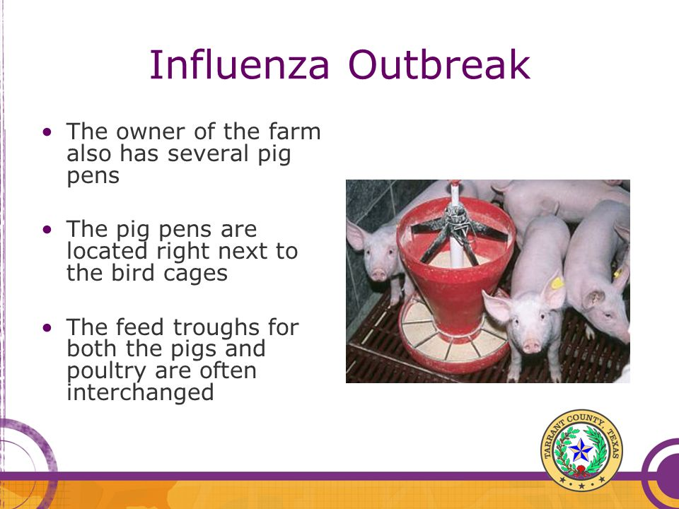 Influenza Outbreak The owner of the farm also has several pig pens The pig pens are located right next to the bird cages The feed troughs for both the
