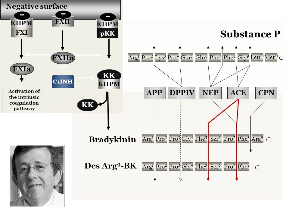 Negative surface KK C1INH Activation of the intrinsic coagulation pathway KHPM pKK KK FXII FXIIa KHPM FXI - - - FXIa Bradykinin Arg 1 Pro 7 Ser 6 Phe 5 Gly 4 Pro 3 Pro 2 Phe 8 C Arg 9 Arg 1 Pro 7 Ser 6 Phe 5 Gly 4 Pro 3 Pro 2 Phe 8 C Des Arg 9 -BK Arg 1 Phe 7 Gln 6 Gln 5 Pro 4 Lys 3 Pro 2 Phe 8 C Gly 9 Leu 10 Met 11 Substance P APPACECPN NEPDPPIV