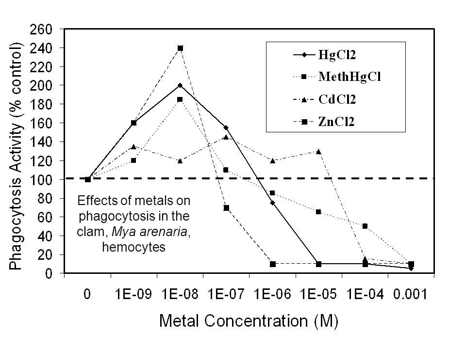 Effects of metals on phagocytosis in the clam, Mya arenaria, hemocytes