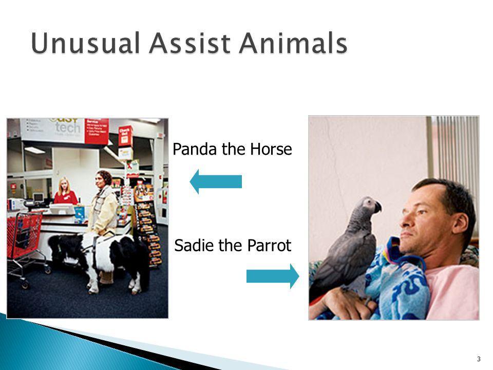 Panda the Horse Sadie the Parrot 3