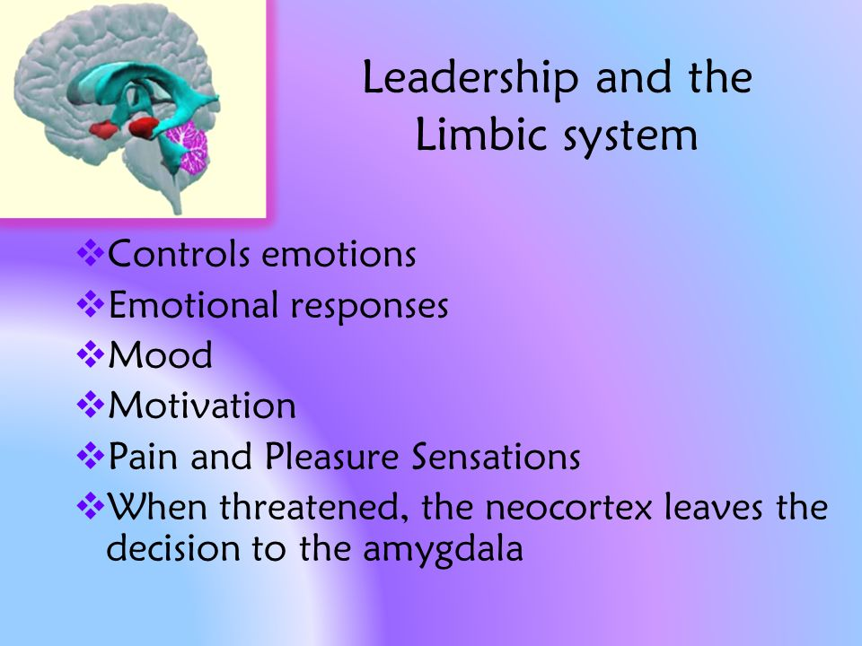 Leadership and the Limbic system Controls emotions Emotional responses Mood Motivation Pain and Pleasure Sensations When threatened, the neocortex leaves the decision to the amygdala