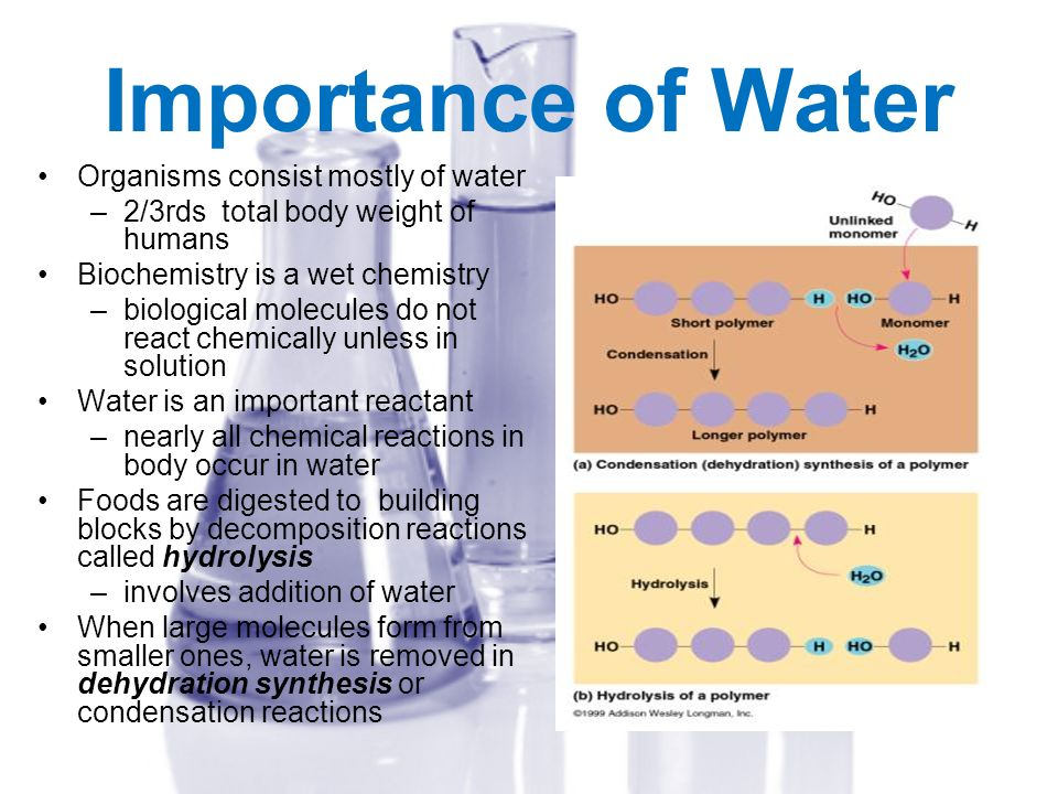 Importance of Water Organisms consist mostly of water –2/3rds total body weight of humans Biochemistry is a wet chemistry –biological molecules do not
