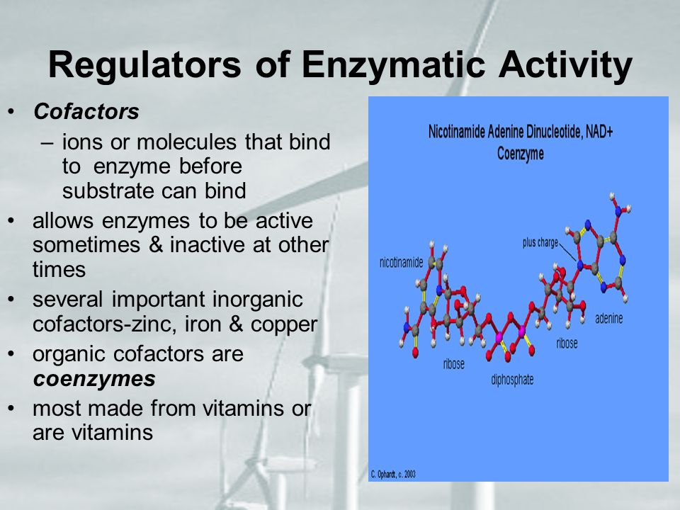 Regulators of Enzymatic Activity Cofactors –i–ions or molecules that bind to enzyme before substrate can bind allows enzymes to be active sometimes &