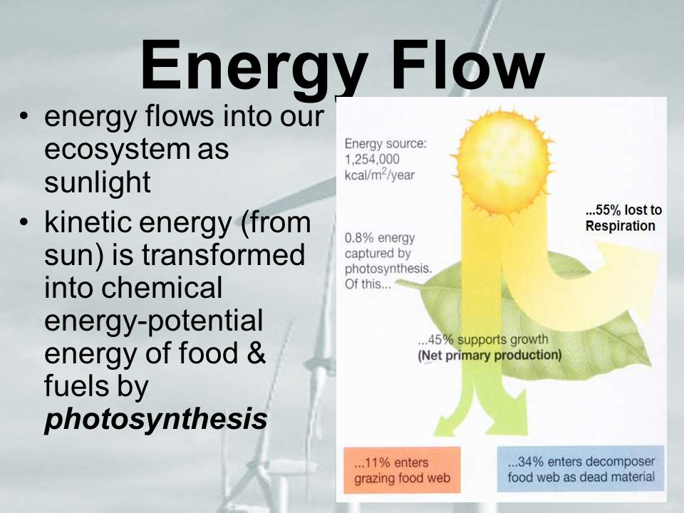 Energy Flow energy flows into our ecosystem as sunlight kinetic energy (from sun) is transformed into chemical energy-potential energy of food & fuels