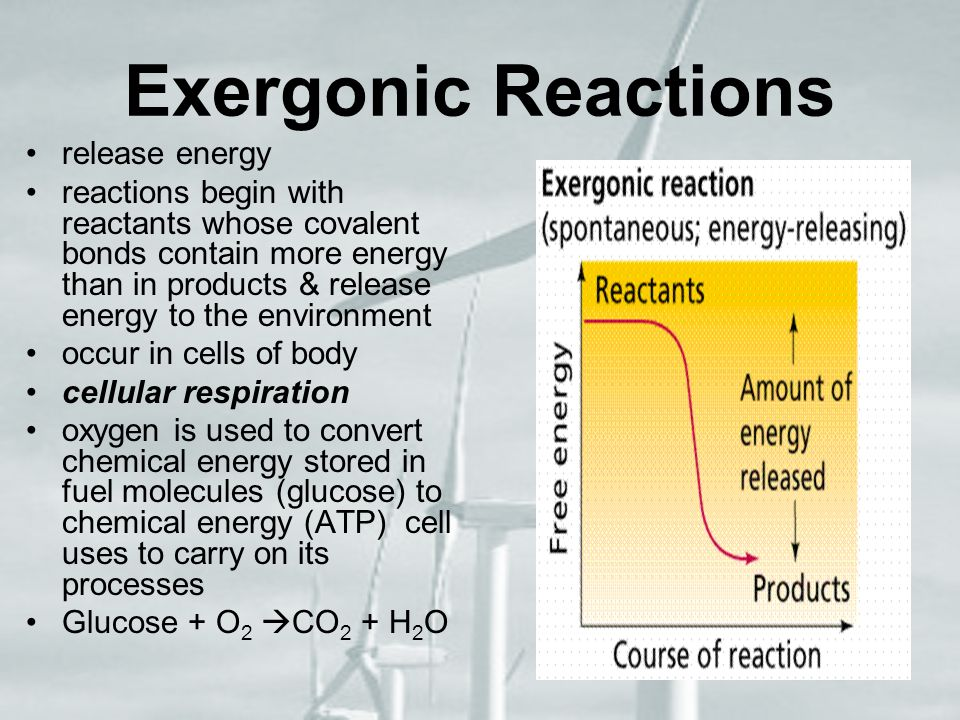 Exergonic Reactions release energy reactions begin with reactants whose covalent bonds contain more energy than in products & release energy to the en