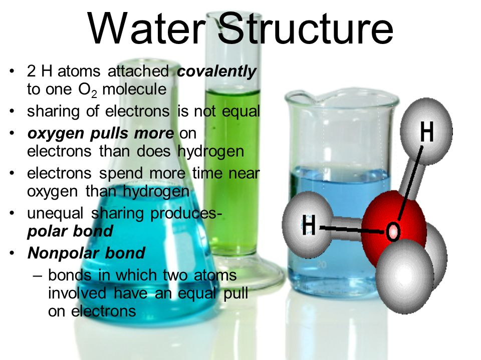 Water Structure 2 H atoms attached covalently to one O 2 molecule sharing of electrons is not equal oxygen pulls more on electrons than does hydrogen