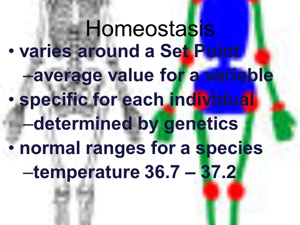 Homeostasis varies around a Set Point –a–average value for a variable specific for each individual –d–determined by genetics normal ranges for a speci