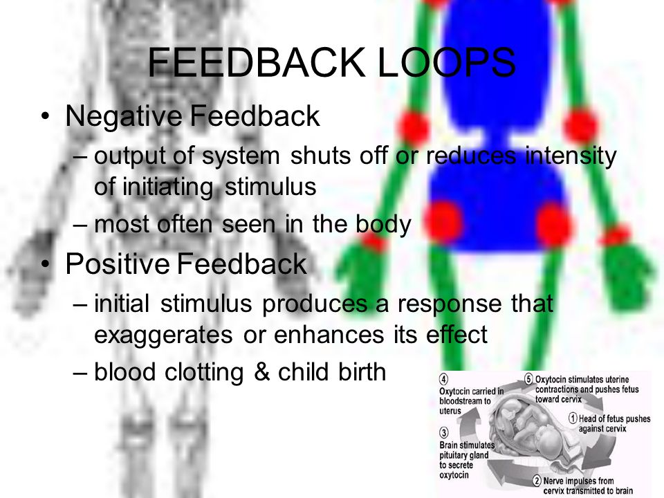 FEEDBACK LOOPS Negative Feedback –output of system shuts off or reduces intensity of initiating stimulus –most often seen in the body Positive Feedbac