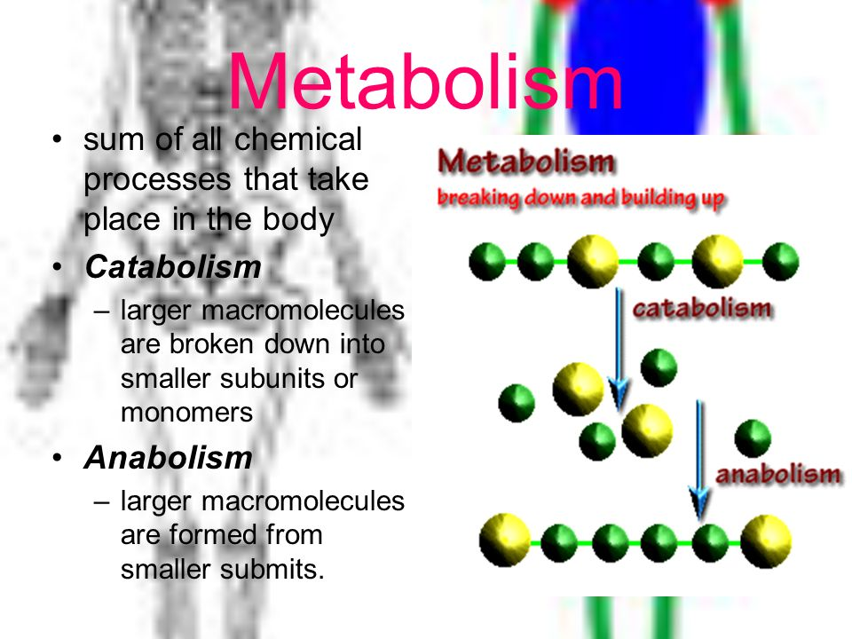 Metabolism sum of all chemical processes that take place in the body Catabolism –larger macromolecules are broken down into smaller subunits or monome