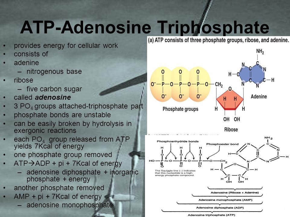 ATP-Adenosine Triphosphate provides energy for cellular work consists of adenine –nitrogenous base ribose –five carbon sugar called adenosine 3 PO 4 g