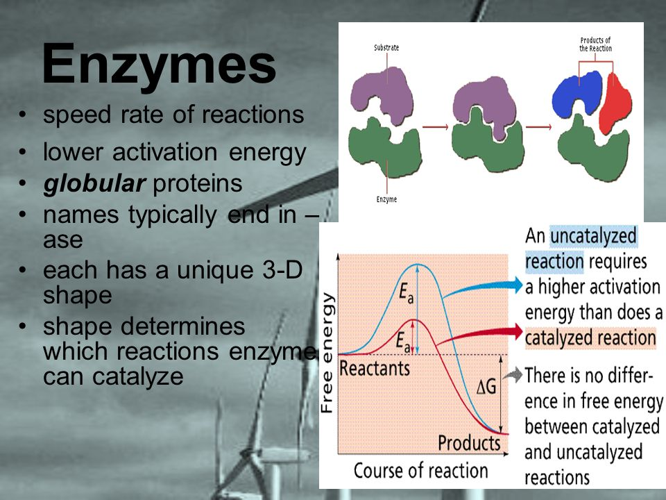 Enzymes speed rate of reactions lower activation energy globular proteins names typically end in – ase each has a unique 3-D shape shape determines wh