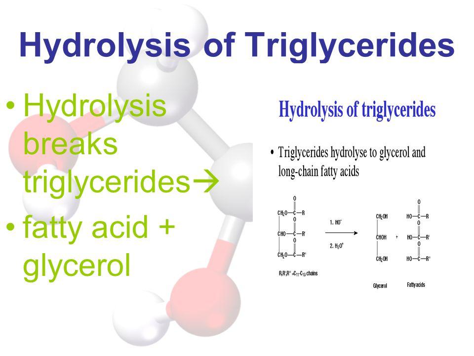 Hydrolysis of Triglycerides Hydrolysis breaks triglycerides fatty acid + glycerol