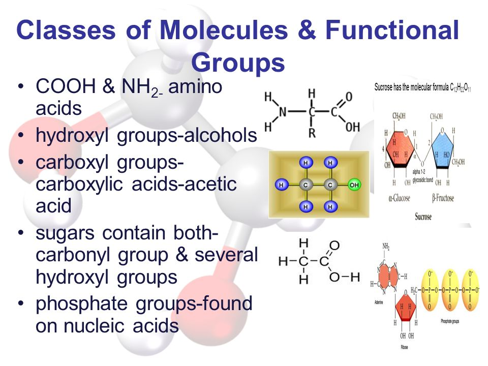Classes of Molecules & Functional Groups COOH & NH 2- amino acids hydroxyl groups-alcohols carboxyl groups- carboxylic acids-acetic acid sugars contai