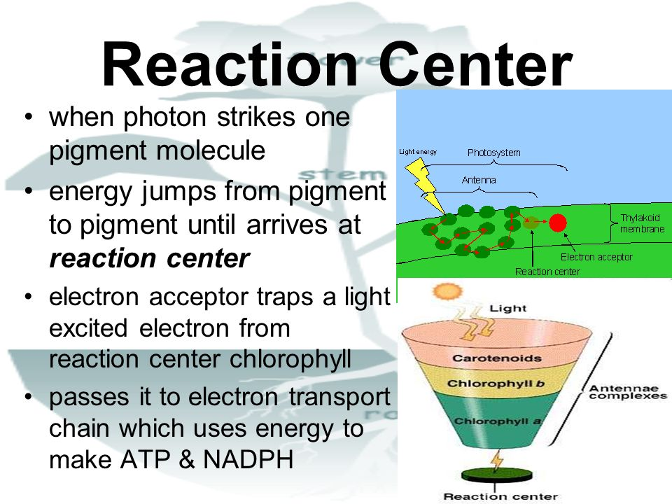 Reaction Center when photon strikes one pigment molecule energy jumps from pigment to pigment until arrives at reaction center electron acceptor traps