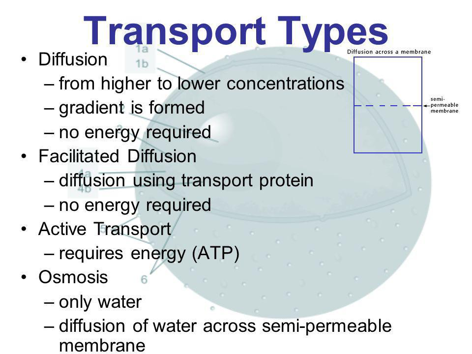 Transport Types Diffusion –from higher to lower concentrations –gradient is formed –no energy required Facilitated Diffusion –diffusion using transpor