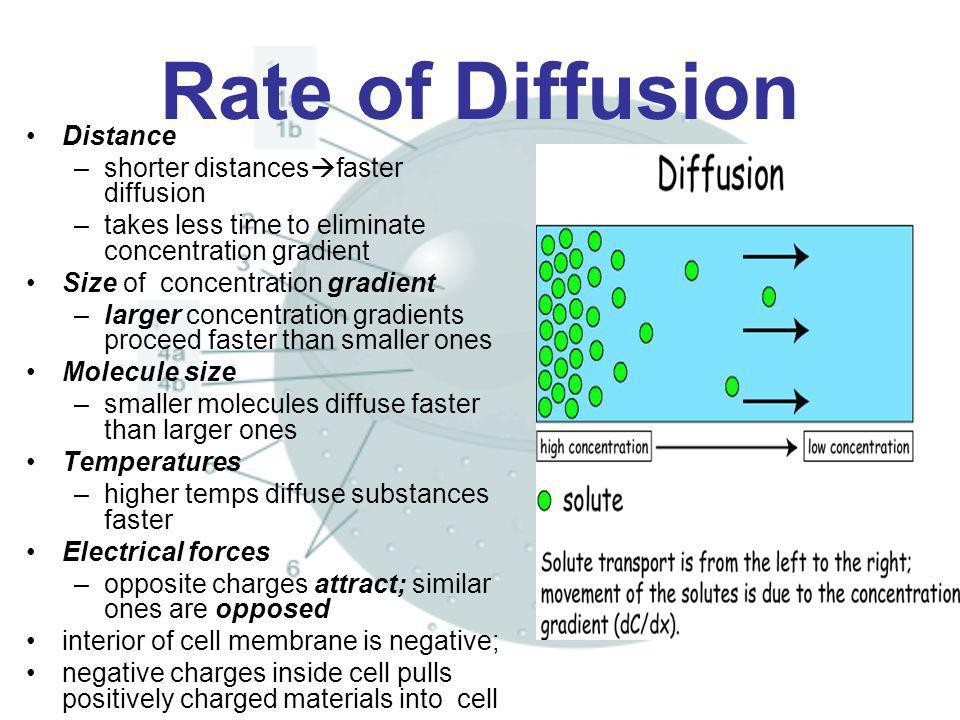 Rate of Diffusion Distance –shorter distances faster diffusion –takes less time to eliminate concentration gradient Size of concentration gradient –la