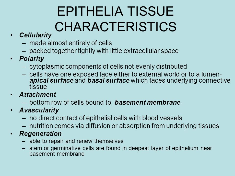 EPITHELIA TISSUE CHARACTERISTICS Cellularity –made almost entirely of cells –packed together tightly with little extracellular space Polarity –cytopla