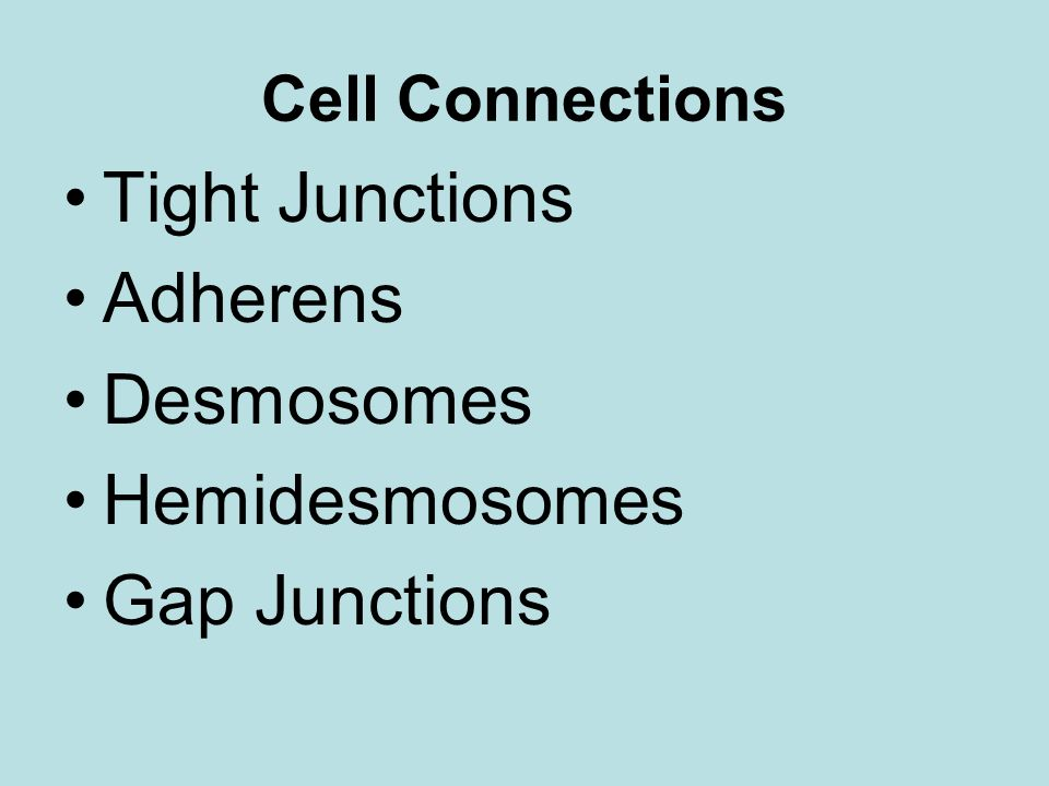 Cell Connections Tight Junctions Adherens Desmosomes Hemidesmosomes Gap Junctions